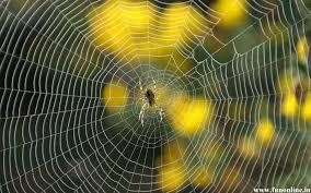 hd spider wallpaper wallpapersafari