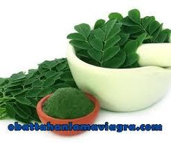 8 daun tanaman alami untuk obat kuat tahan lama pria