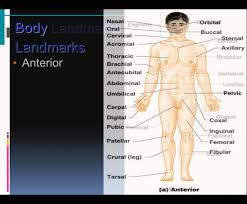 survey of human anatomy and physiology human anatomy and