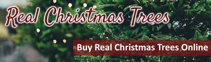 buy real trees at jacksons nurseries