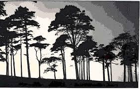 black trees by euchariss on deviantart