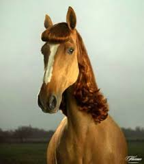 hairstyles for horses horses with human hairstyles life is the road from love to death