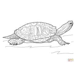 red eared slider turtle coloring page free printable coloring pages
