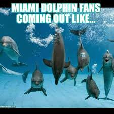 Miami Dolphins Memes - 22 meme internet miami dolphin fans coming out like dolphins