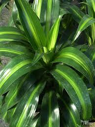 8 best plants indoor images on pinterest house plants indoor
