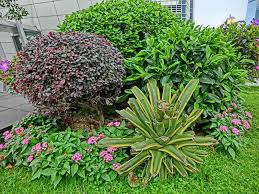 Plants For Patio by Garden Yard U Patio Show The Plants Vendors Solidaria Plants Where