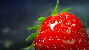 Little Berry Little Berry