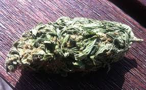 how many grams of sugar in a bud light complete guide to trimming cannabis grow weed easy
