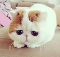 Cute Cat Meme Generator - sevimli kedi resimleri erkek modası kadın modası ünlülerin