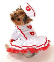 Yorkie Halloween Costumes Pin Mª Jesús Sanchez Disfraces Dog Yorkies