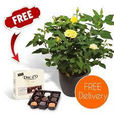 Fragrant Climbing Plant - purple rose bush buy freespywarefixescom