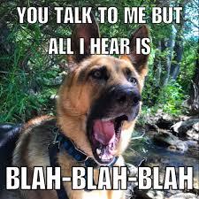 Dog Lover Meme - 20 german shepherd memes for any dog lover american kennel club