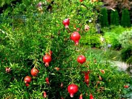 ornamental trees for landscaping wearefound home design