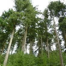 douglas fir propagation horticulture 202 2015