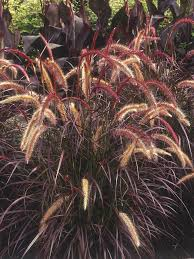 types of ornamental grasses diy garden projects garden projects