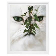 puss puss magazine house plant print by stephen eichhorn