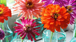 interesting facts about uk flower industry history asters