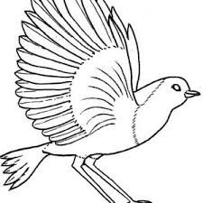 picture bird coloring color luna