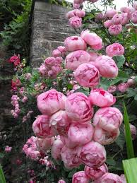 543 best how does your garden grow images on pinterest flowers