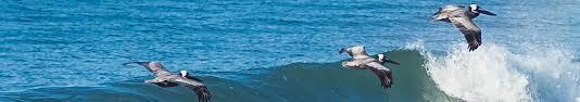 Beach House Rentals Topsail Island Nc - topsail island oceanfront vacation rentals topsail realty