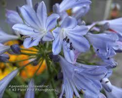 native plants nz free desktop wallpaper new zealand flowers trees plants nature