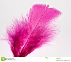 purple feather purple feather stock photo image of closeup texture 10178738