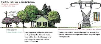 How To Construct A House On A Land Of 25 40 Plant The Right Tree In The Right Place Baltimore Gas And