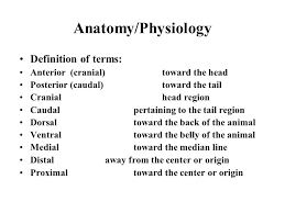Anatomy And Physiology Of The Back Anatomy Physiology Definition Of Terms Anterior Cranial Toward