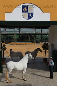 El Patio Houston by 35 Best Brand Ref Images On Pinterest Branding Freeze And Horse