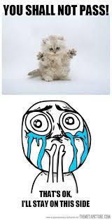 Cuteness Overload Meme - that s ok the meta picture