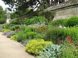 10 easy care plants for classic herbaceous border at oxford botanic garden top hardworking