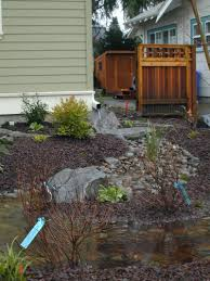 example rain garden in low lying area of yard where storm rain