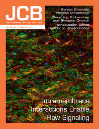a little sugar goes a long way the cell biology of o glcnac jcb