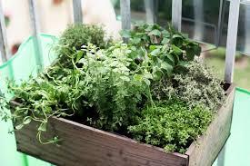 les herbes de cuisine herbes aromatiques faites vous ces 12 erreurs potagerdurable com