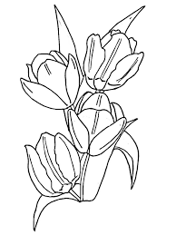 tulip flower coloring pages getcoloringpages com