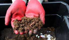 Composting Pictures by How To Create A Composting Worm Bin In 5 Easy Steps Edible Alaska