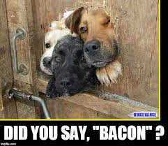 Dog Bacon Meme - did you forget to unlock the gate imgflip