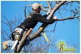 tree tree service tree removal tree services