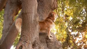bluetick coonhound climbing tree tree climbing dog wows neighborhood dogtime