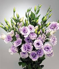 lisianthus flower lavender lisianthus wedding flowers seeds