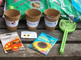 growing sunflowers with toddlers planting sunflowers nature