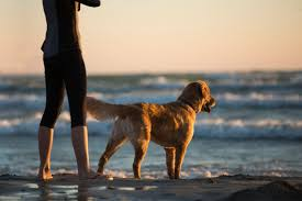 traveling with pets images Tips for traveling and rv camping with your pets jpeg