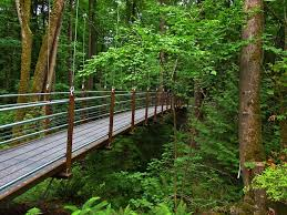Botanical Garden Bellevue Landscape Landscape Bellevue Botanical Garden