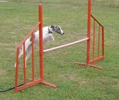 Backyard Agility Course Whippet Agility Training