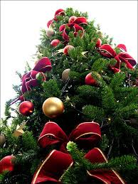 Christmas Tree Shop In Freehold - 12 christmas traditions for palestinian christians in israel