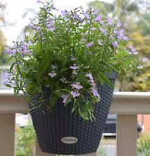 flower u0026 plant railing planters boxes ebay