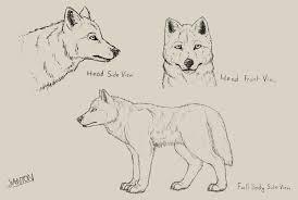 wolf sketches by wanton fox on deviantart