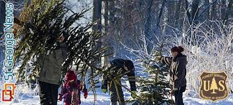 Cutting Christmas Tree - where how to get christmas tree cutting permits for utah u0027s