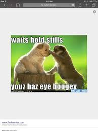 Cutest Memes - cutest memes omg amino