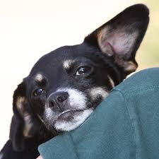 Is It Legal To Bury Your Dog In The Backyard - san mateo county animal laws peninsula humane society u0026 spca